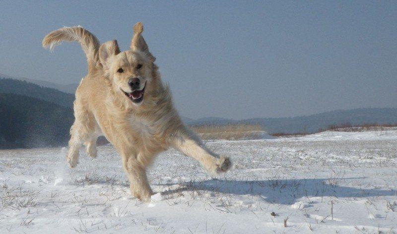 hund i snøen