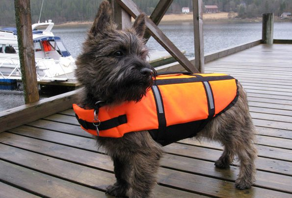 Hund med redningsvest