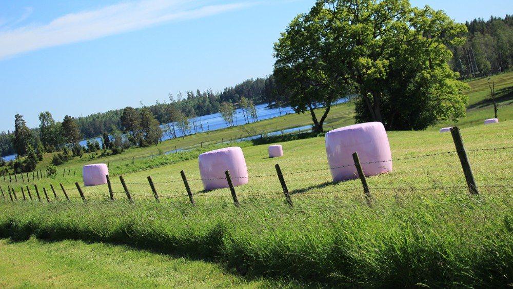 rosa baller bønder