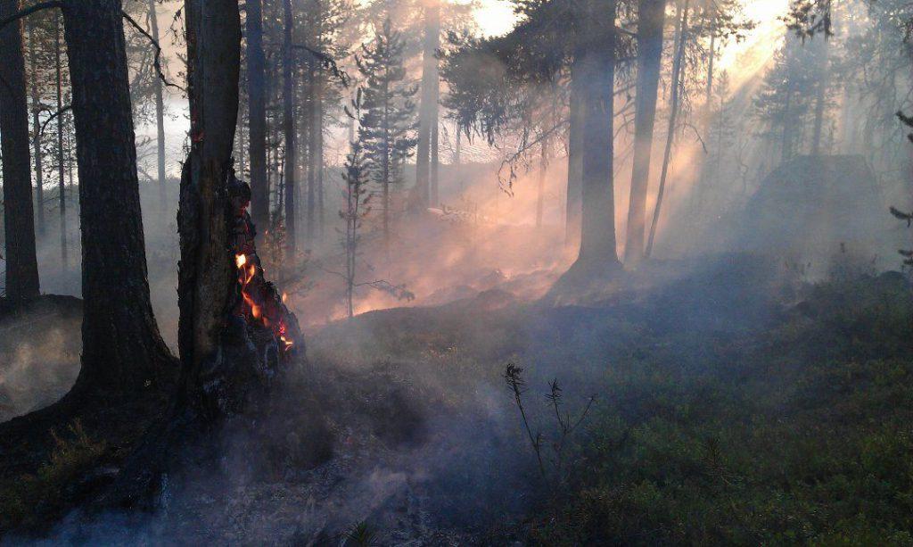 brann skog