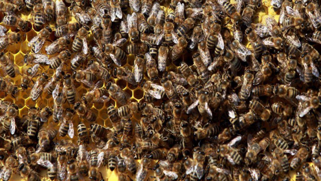 bier honning